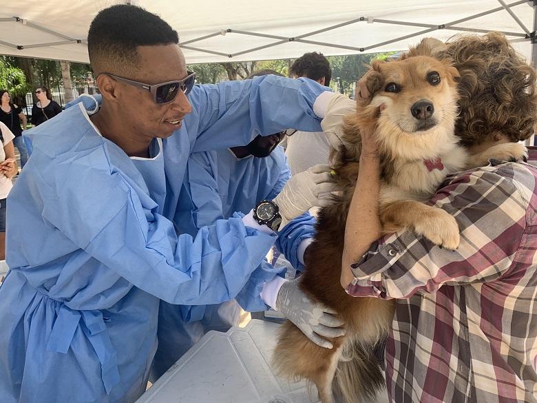 O processo de chipagem é rápido e indolor para o animalzinho. Foto: Divulgação \ Vigilância Sanitária